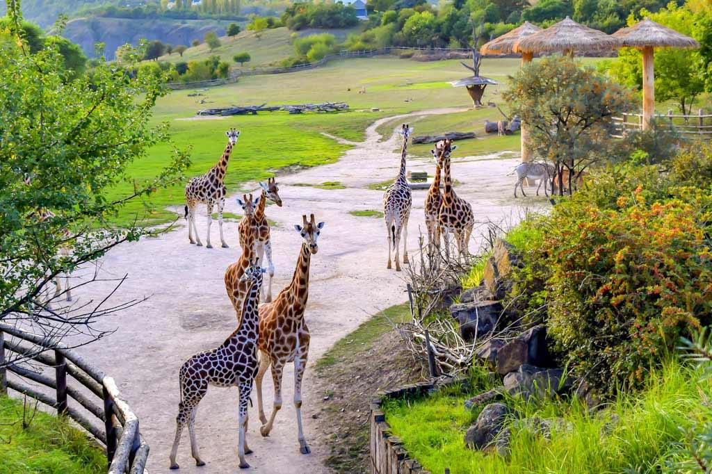 Лондонский зоопарк: обитатели, история, местонахождение