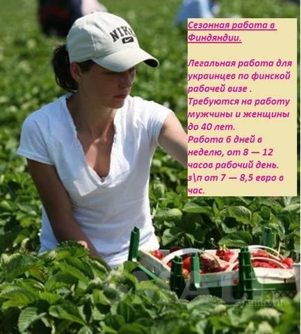 Легальная работа в сельском хозяйстве в финляндии в 2021 году