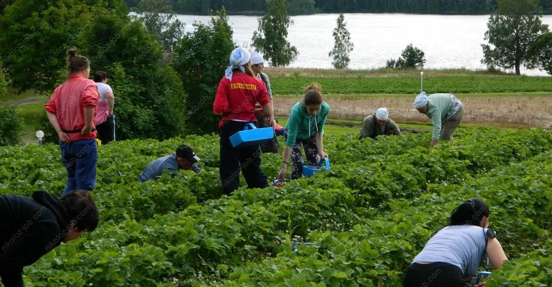 Работа в финляндии без посредников