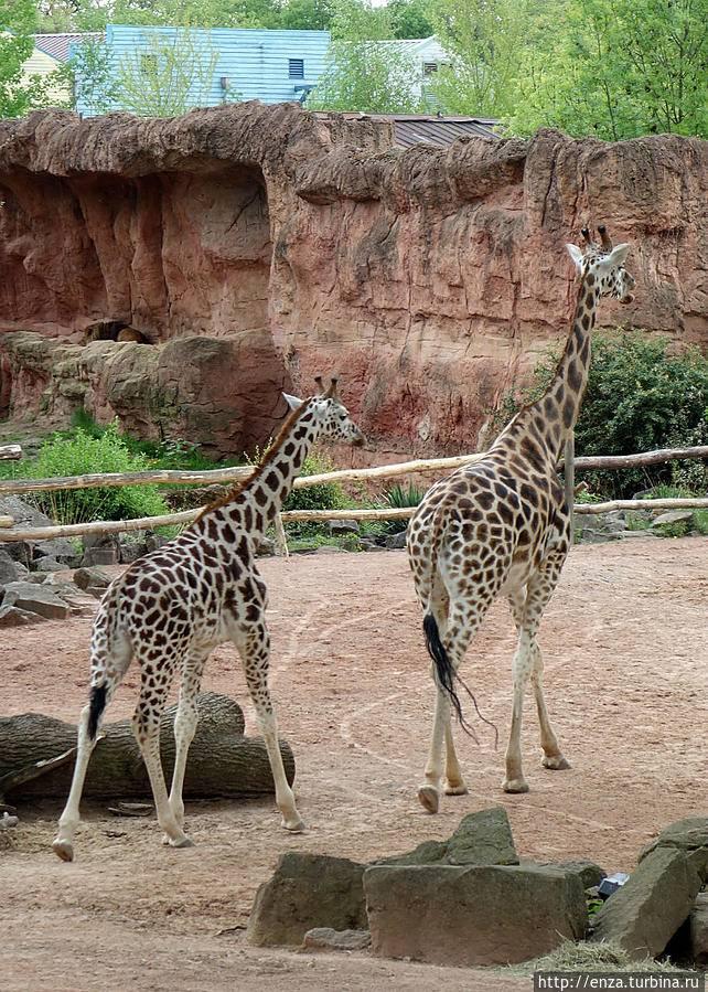 Берлинский зоопарк и аквариум – большая семья для тысяч животных и обитателей водного мира