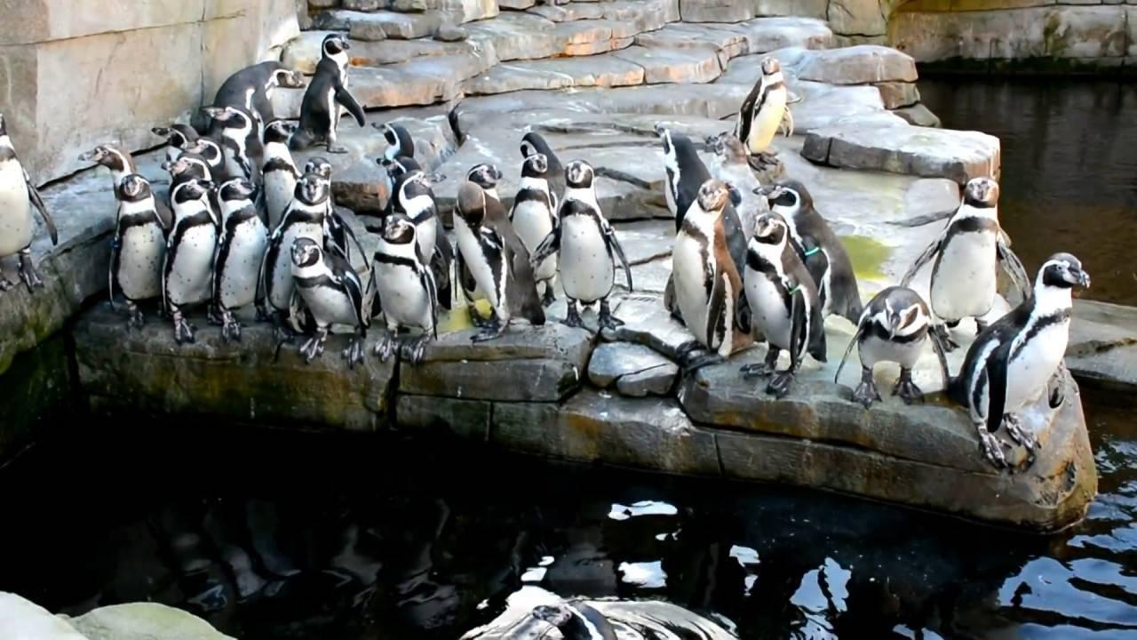 Путешествие по зоопаркукак по карте мира