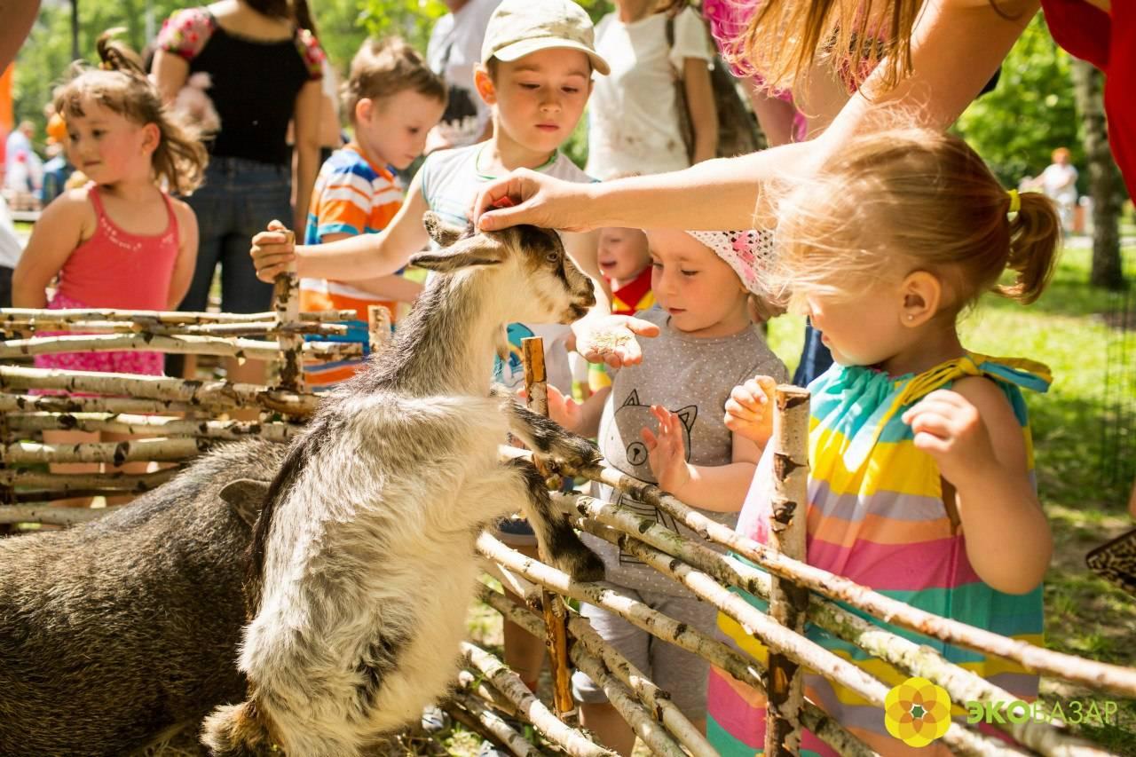 Лондонский зоопарк (london zoo), лондон. животные, цена билета, режим работы, отзывы, фото и видео, официальный сайт, как добраться — туристер.ру
