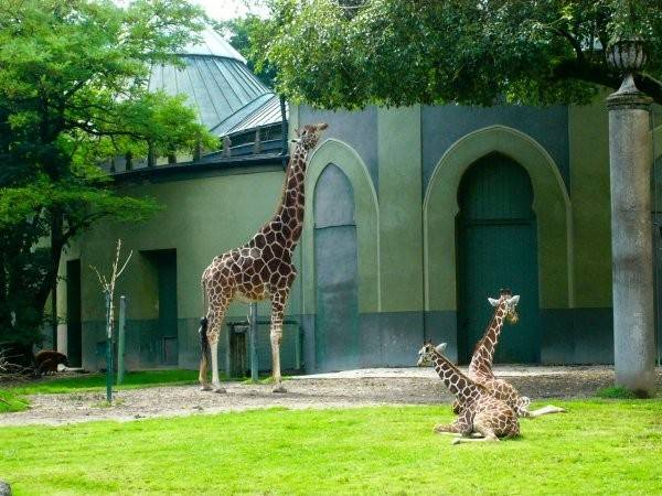 Зоопарки германии