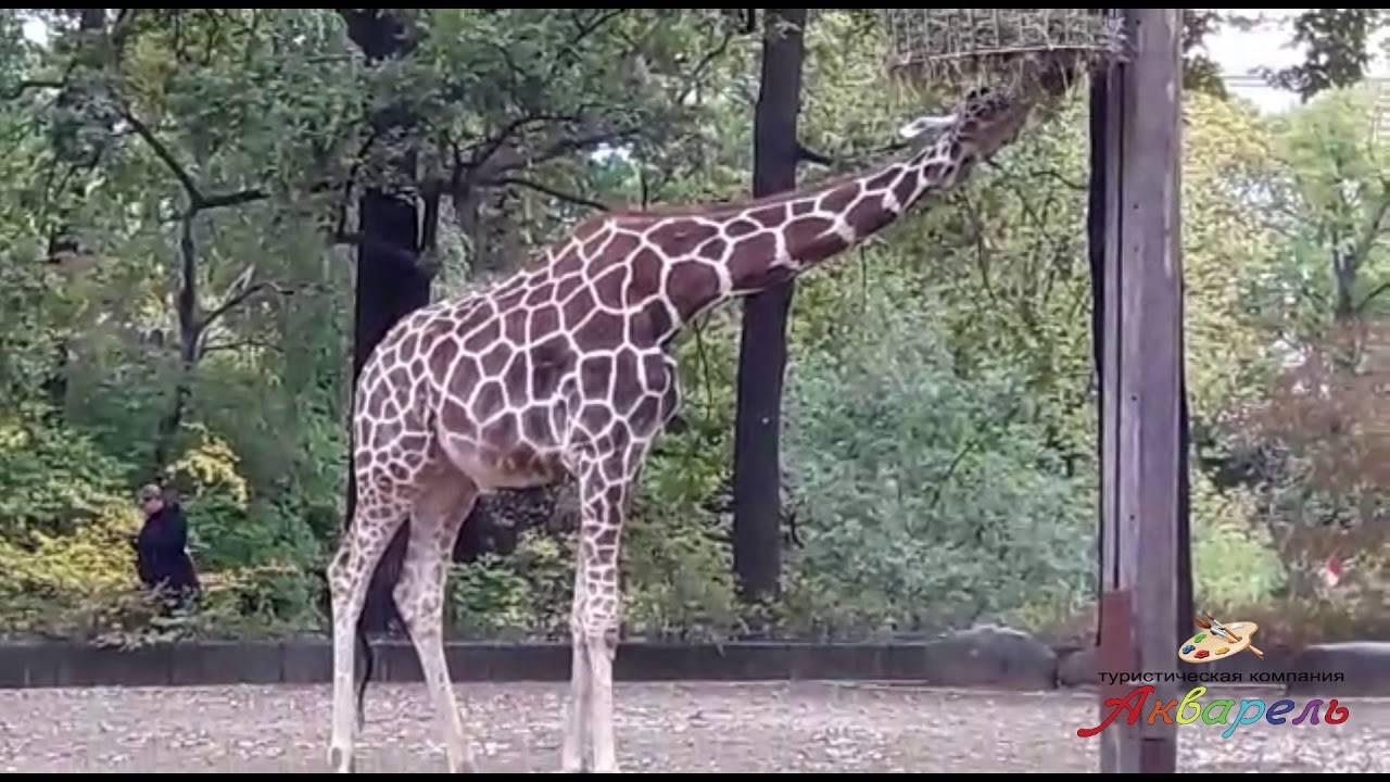 Берлинский зоопарк: зоологический сад в берлине - статья
