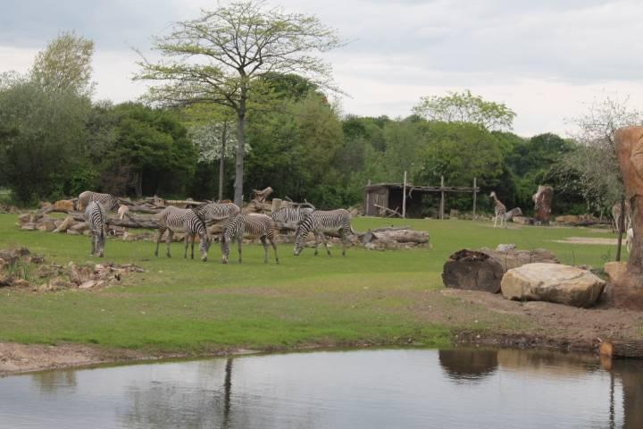 Зоопарки в германии