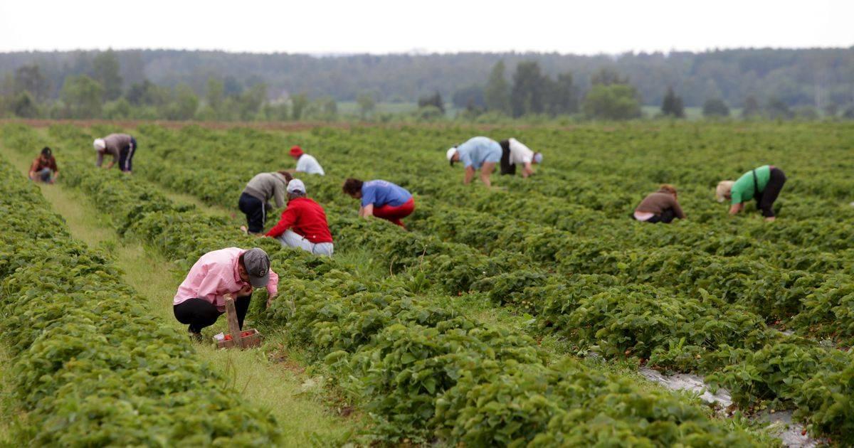 Работа в польше - сельское хозяйство