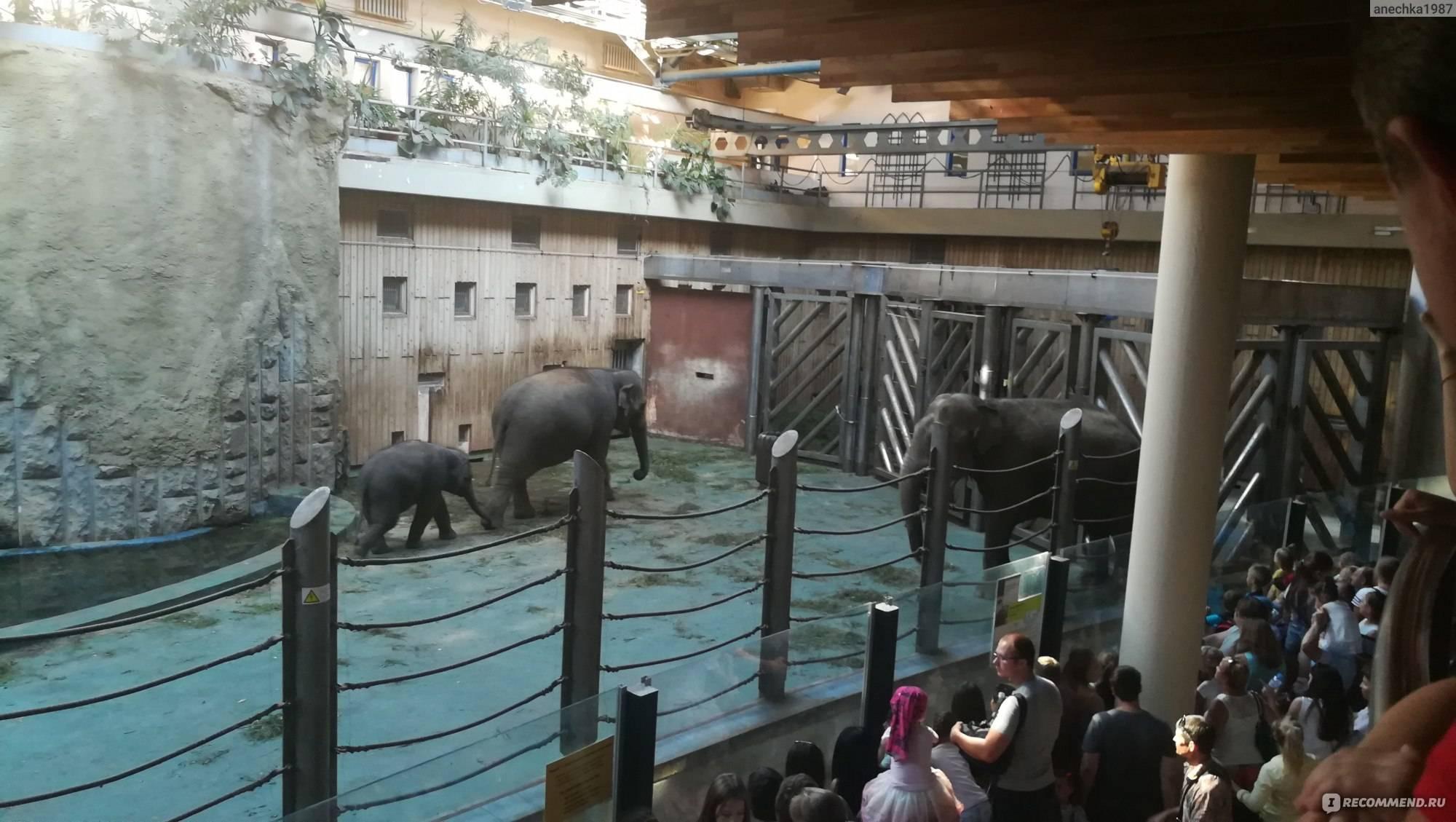 Зоопарк калининграда. адрес, цены на билеты 2021, фото, видео. отели рядом, как добраться – туристер.ру