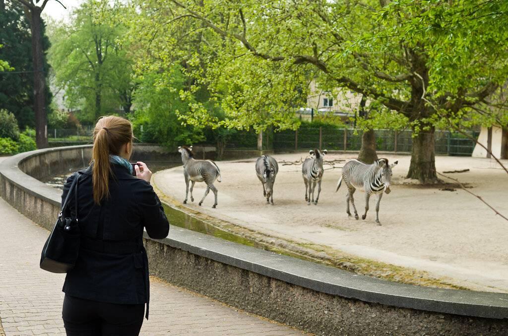 Франкфуртский зоопарк — википедия