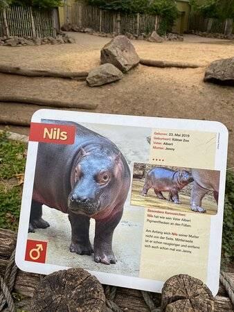Киевский зоопарк, киев: цены 2021, билеты онлайн, сайт, фото, видео, как добраться, отели – туристер.ру