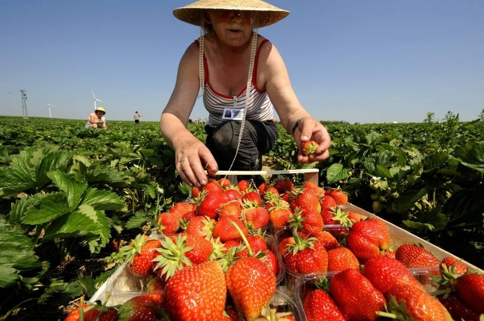 Работа в сфере сельского хозяйства за рубежом