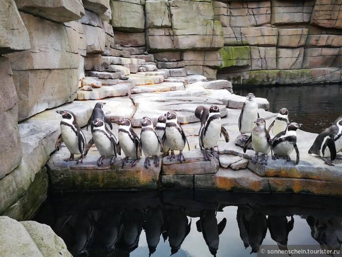 Зоопарки гамбурга   vasque-russia.ru