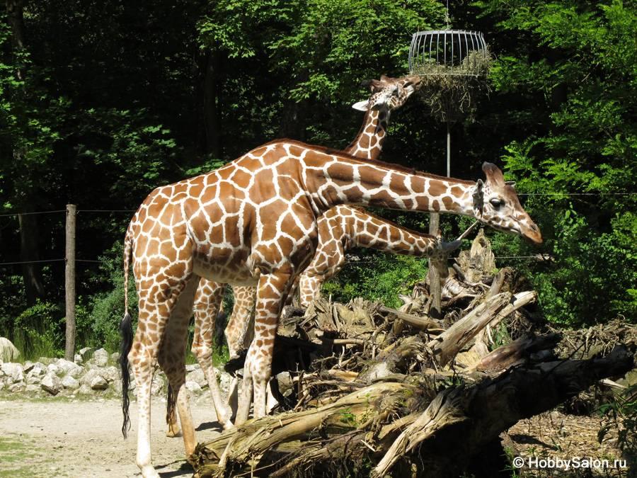 Особенности посещения кельнского зоопарка в 2021 году
