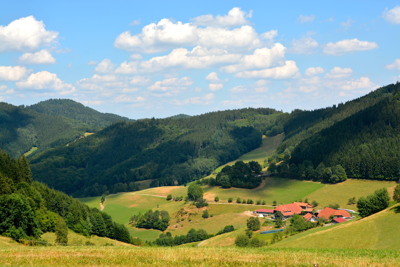 Шварцвальд (германия)