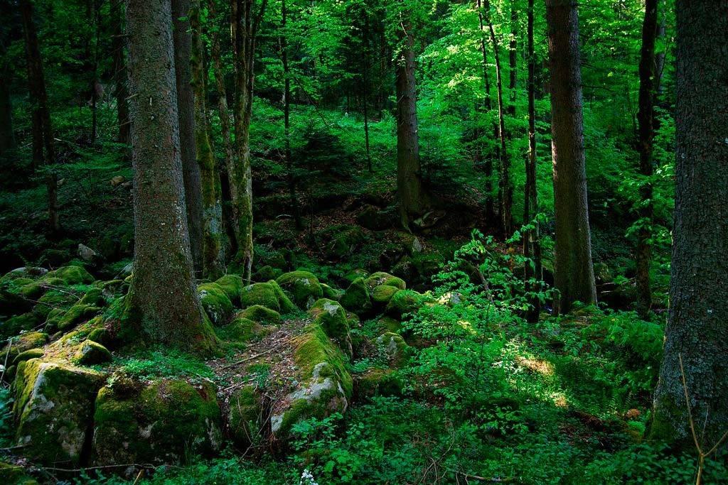 Национальный парк баварский лес (nationalpark bayerischer wald) - munchenguide