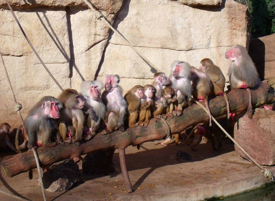 Пражский зоопарк, прага, 2021. как добраться, цены на билеты, режим работы зимой и летом, отзывы, карта – туристер.ру