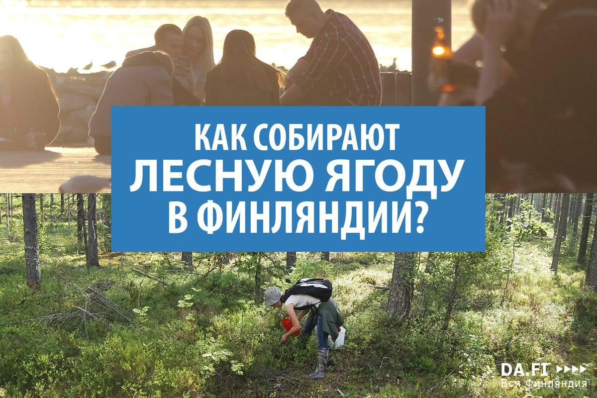 Работа в финляндии для русских - вакансии 2020 года и отзывы мигрантов