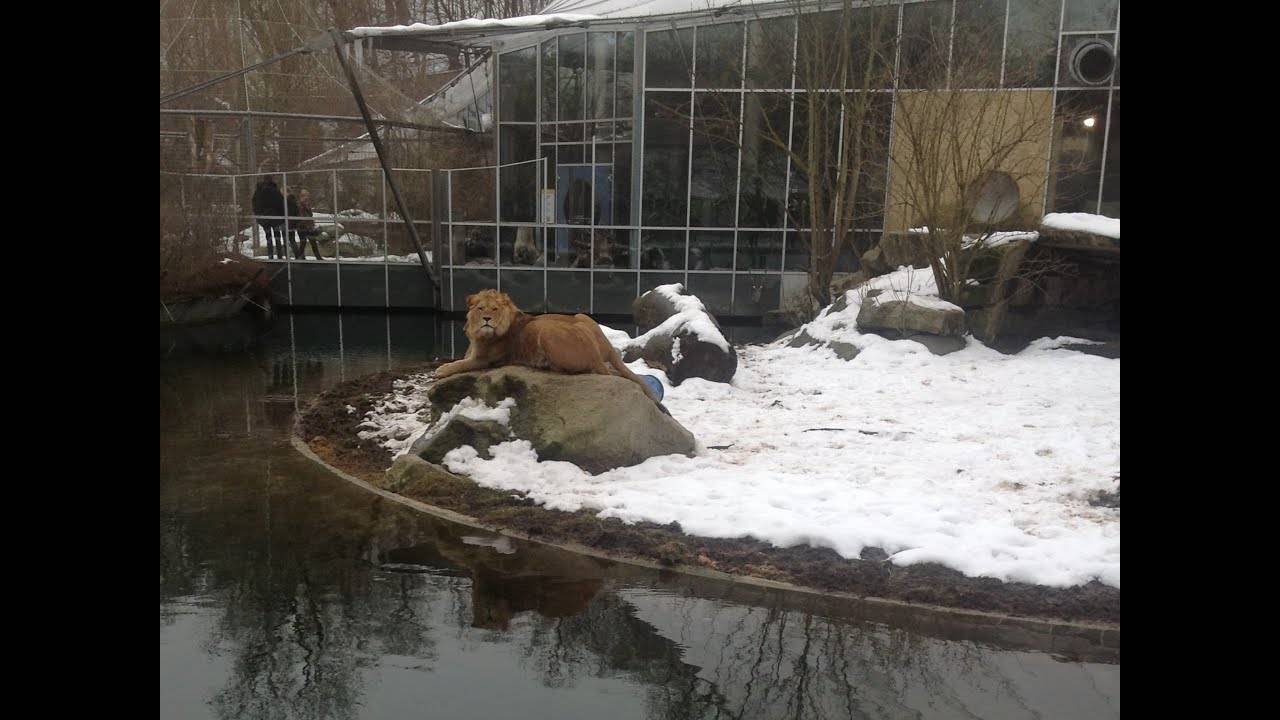 Лучшие зоопарки пяти континентов — блог onetwotrip
