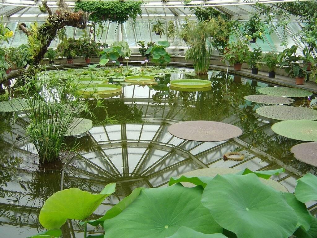 Ботанический сад (берлин) - вики