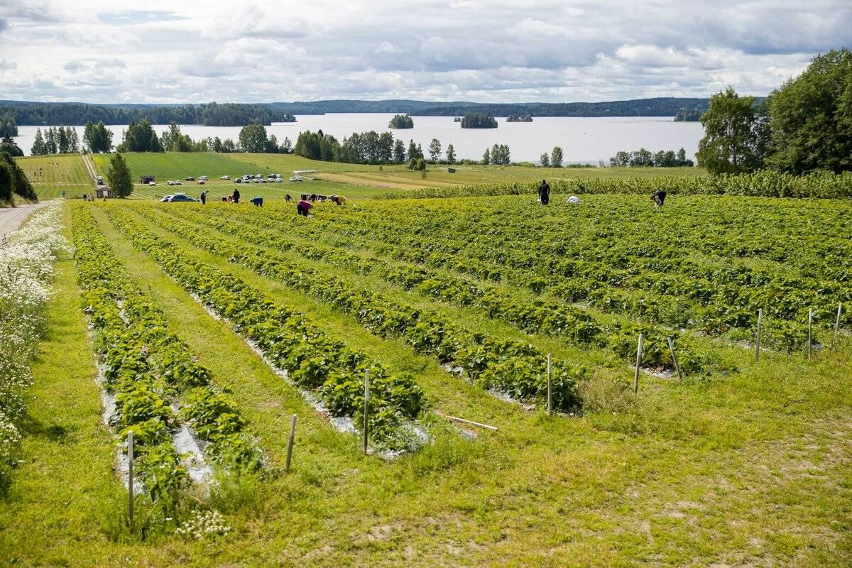 Рабочая виза в финляндию, как получить разрешение на работу, цена в санкт-петербурге для россиян
