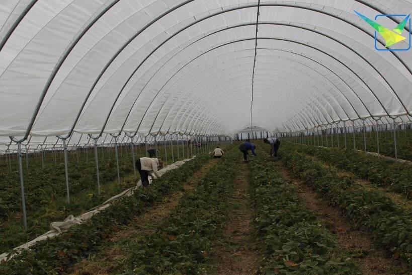 Сельское хозяйство финляндии: отрасли и характеристика