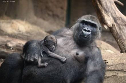 Франкфуртский зоопарк: животные, билеты, часы работы, как добраться, отели — туристер.ру