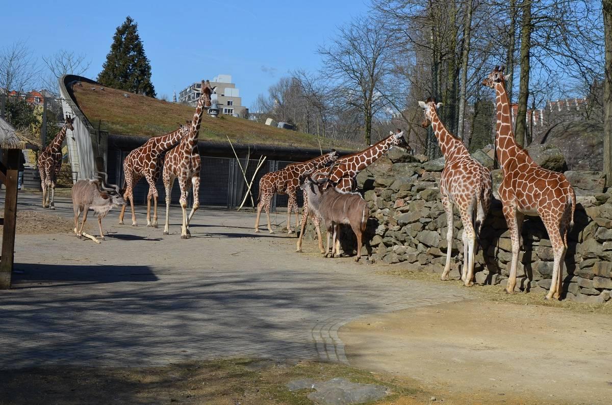 Лучшие зоологические парки планеты - мой отпуск - медиаплатформа миртесен