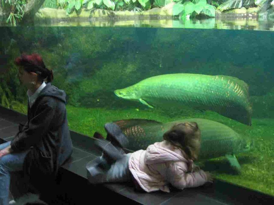Берлинский аквариум (aquarium berlin)