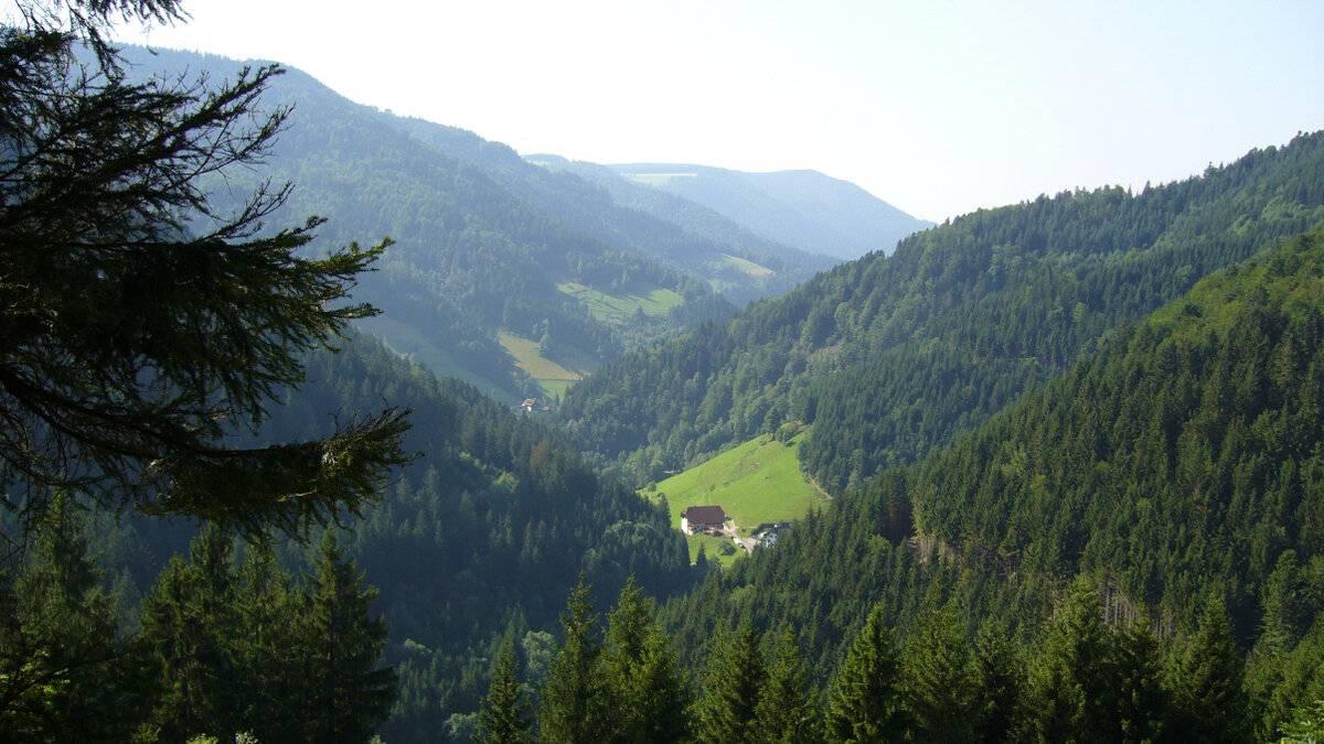Шварцвальд или черный лес