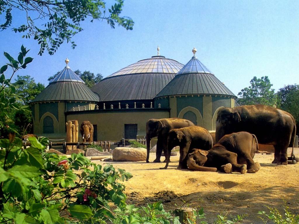 Лучшие зоопарки пяти континентов