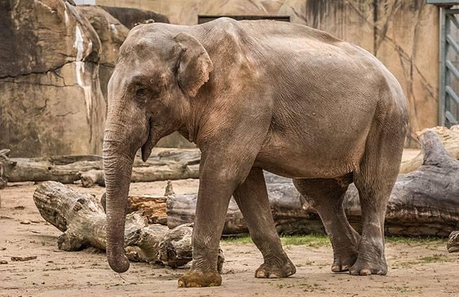 Ялтинский зоопарк «сказка», ялта. цены 2021, фото, видео, официальный сайт, как добраться – туристер.ру