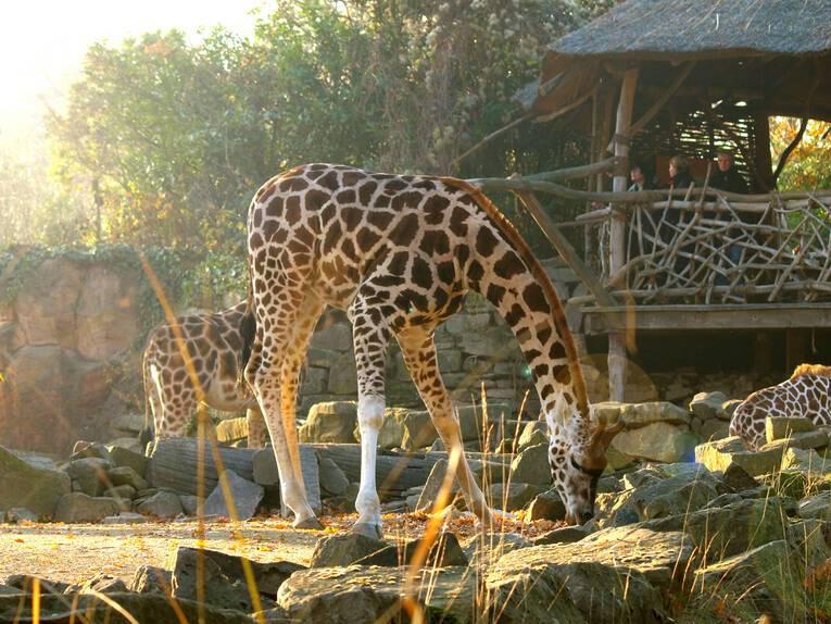 Старейшие зоопарки мира