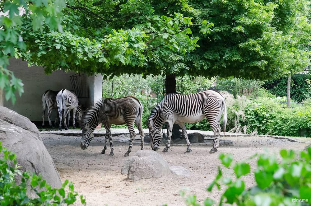 Ганновер – город парков и садов в германии