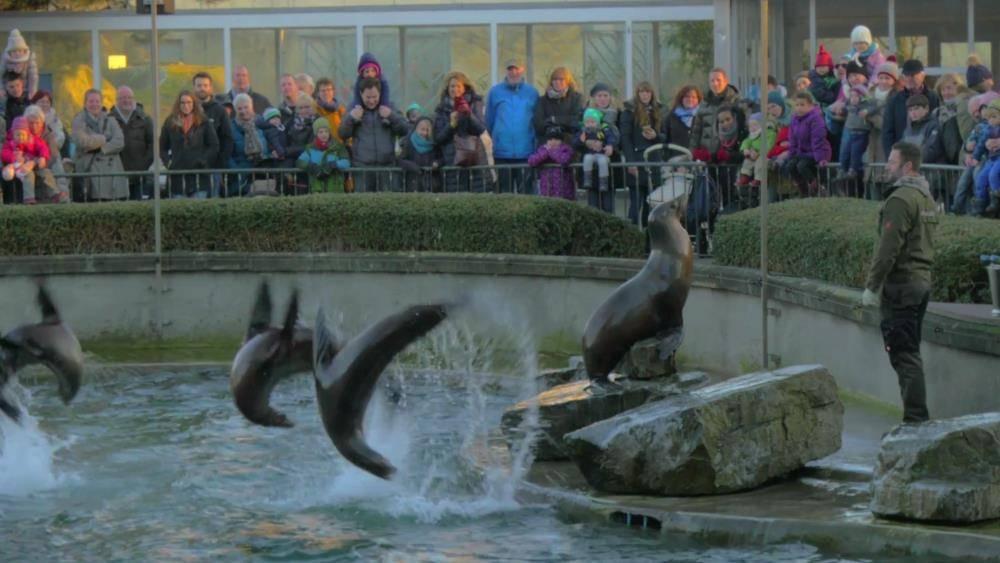 К зверушкам без очереди: как посетить московский зоопарк, минуя кассы