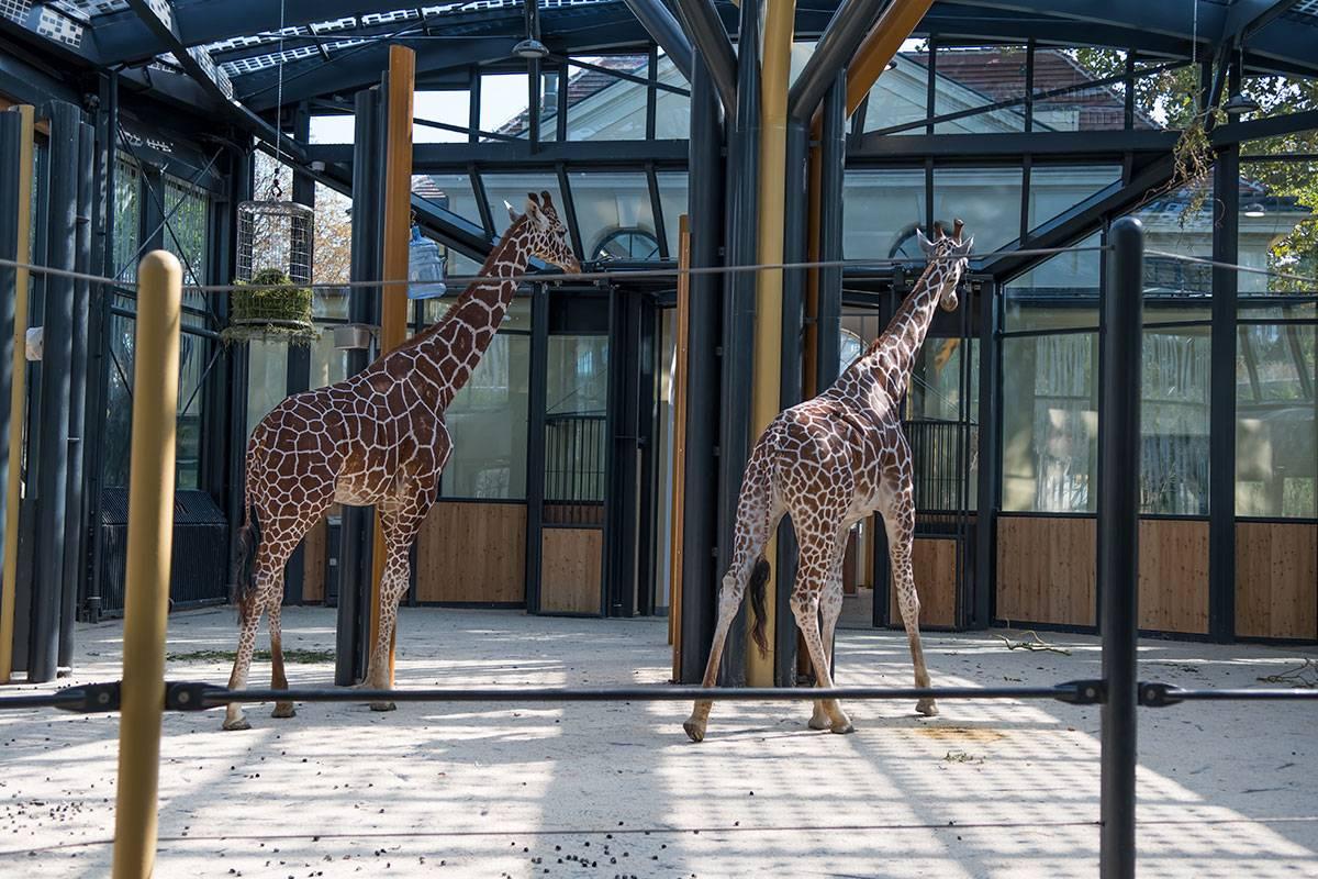 5 самых интересных зоопарков россии где стоит побывать детям и взрослым