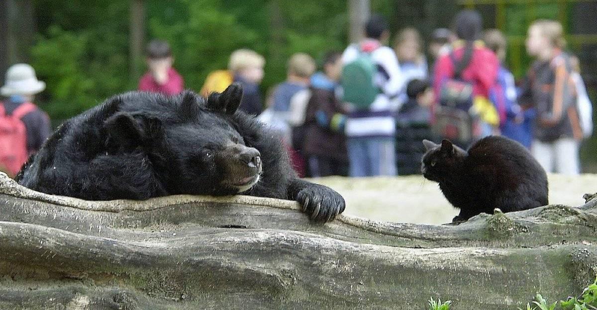 Контактный зоопарк «страна енотия» в измайлово, москва. официальный сайт, цены 2021, отзывы посетителей, как добраться, фото и видео — туристер.ру.