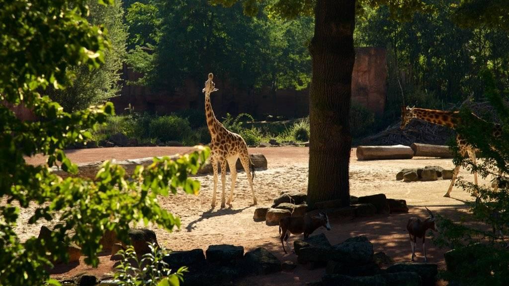 Зоопарки и зверинцы в германии