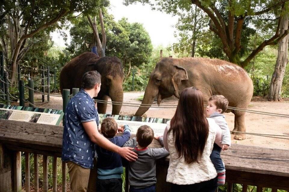 Человеческие зоопарки — когда людей содержали в вольерах для развлечения публики