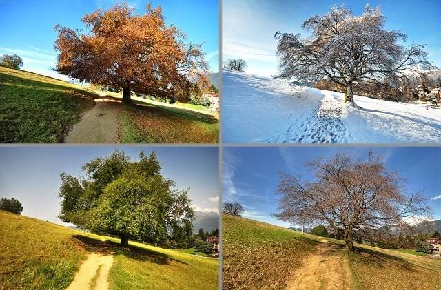 Погода в германии зимой