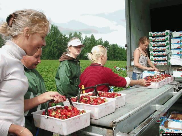 Сезонная работа в финляндии, работа водителем, для семейных пар в 2020 году