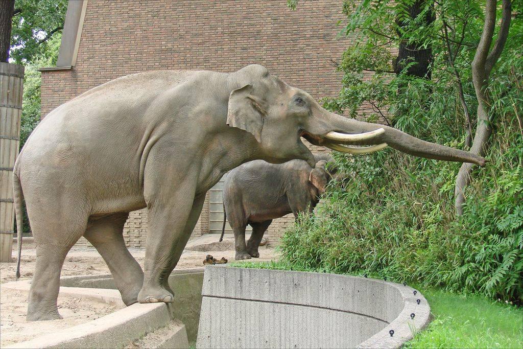 10 самых примечательных зоопарков мира