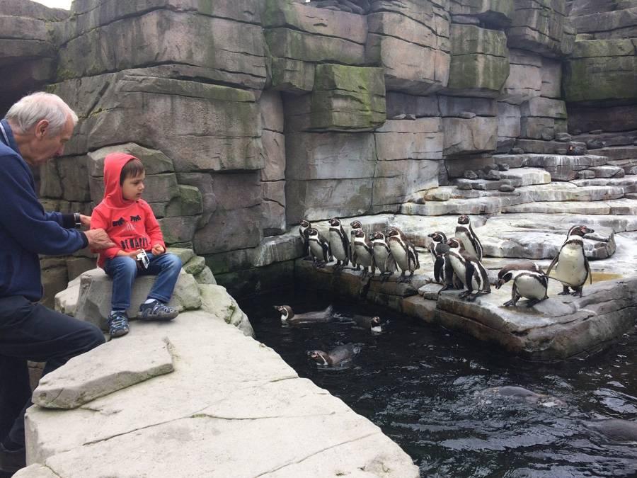 Зоопарк в будапеште: в шаге от дикой природы