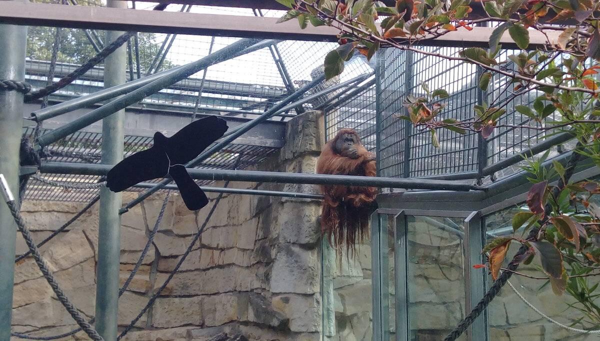 Прогулки по берлинскому зоопарку (zoologischer garten berlin) – так удобно! traveltu.ru