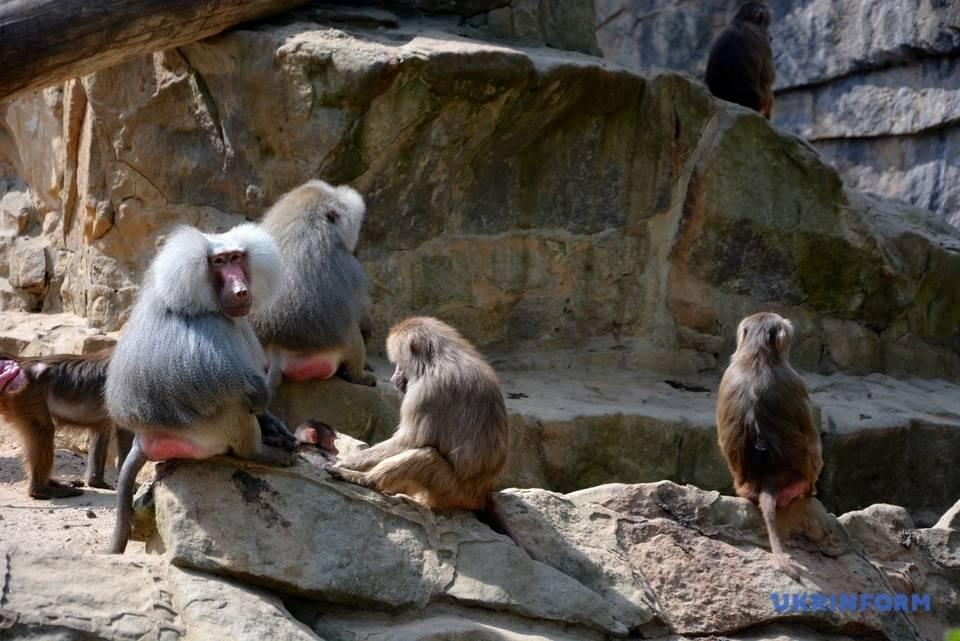 Берлинский зоопарк: история, фото животных, время работы