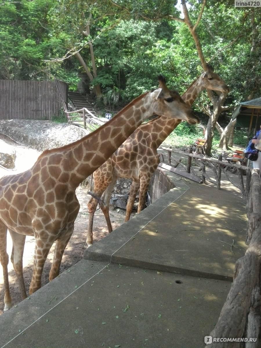 10 самых лучших зоопарков мира - zefirka