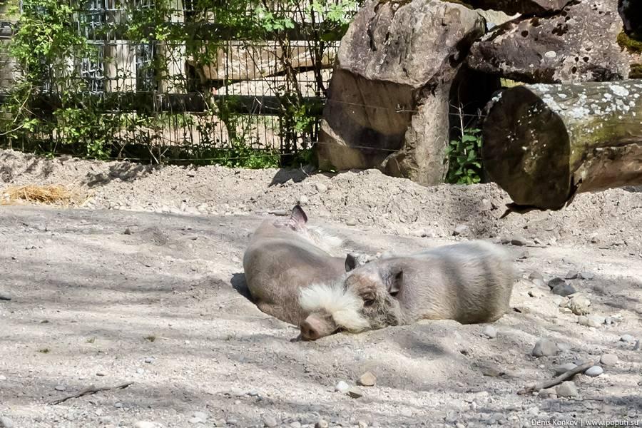 В чем особенность зоопарка хагенбека в гамбурге