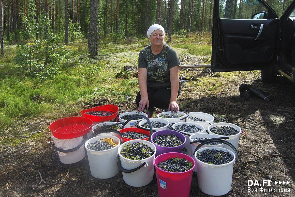 Как устроиться на работу в финляндии быстро и легально в 2021 году