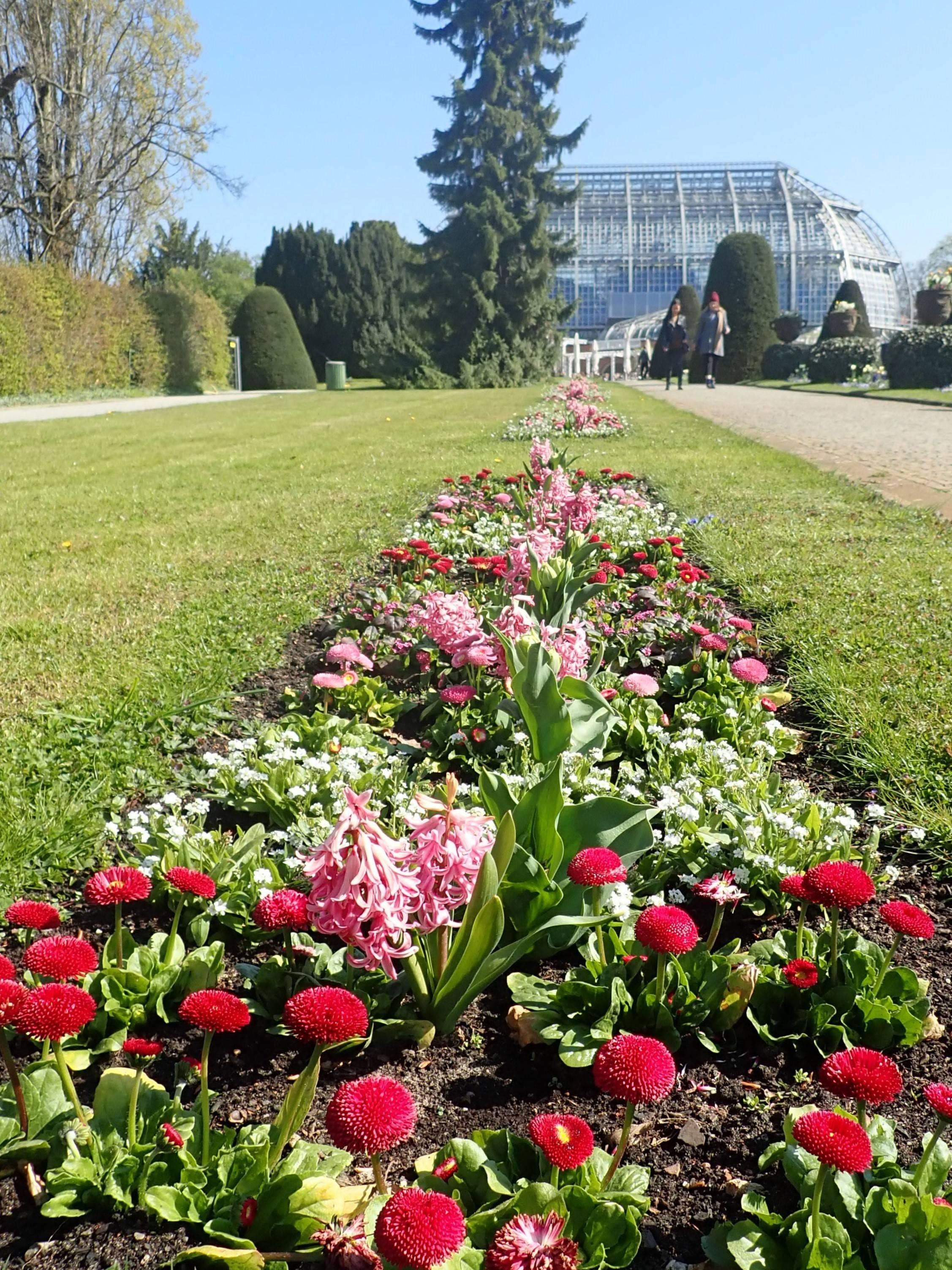 Ботанический сад — википедия