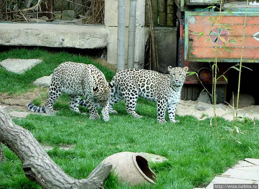 Зоопарки в германии - радость для детей и взрослых