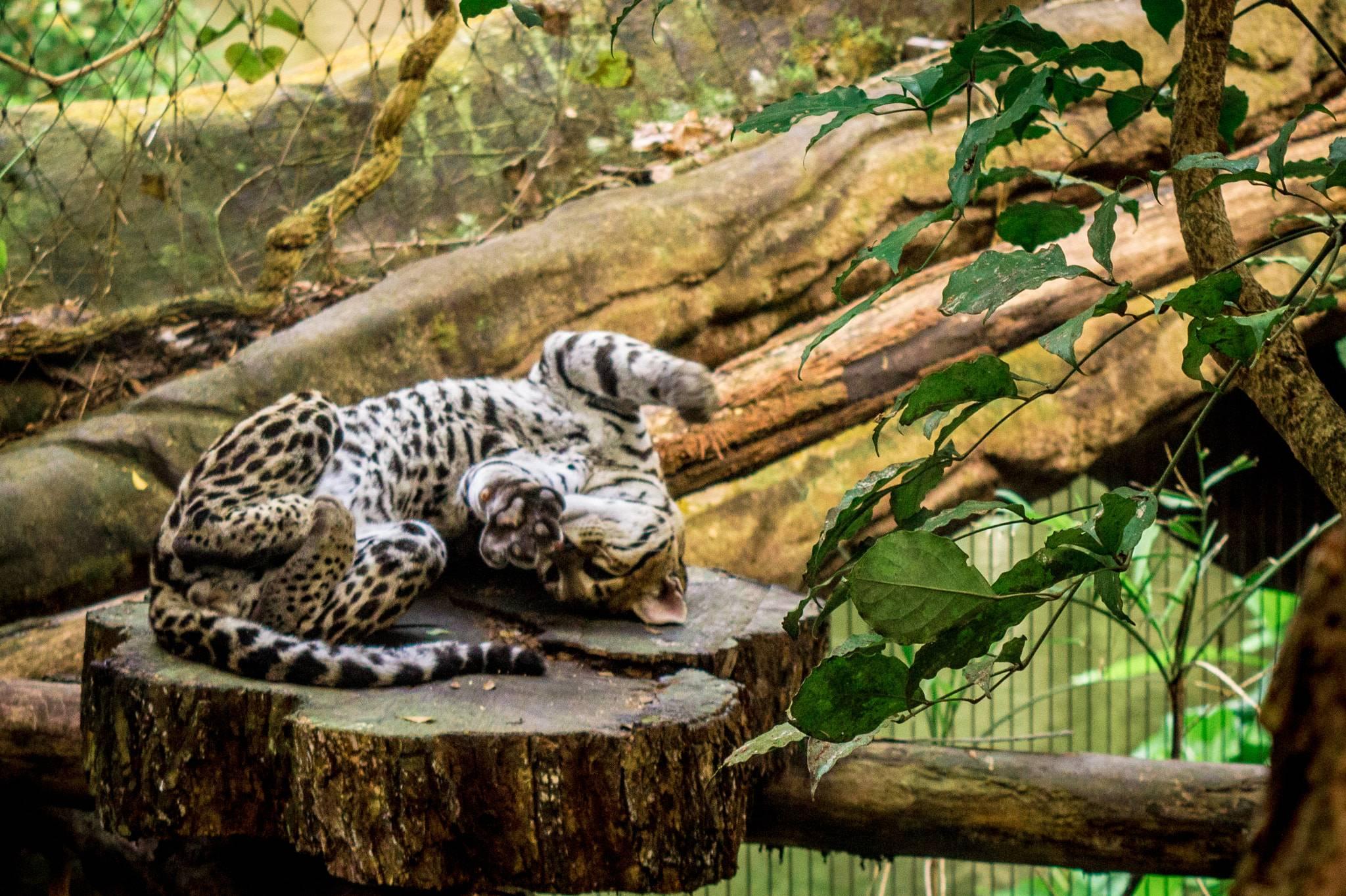 Wikizero - лейпцигский зоопарк