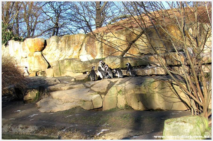 Берлинский зоопарк, германия: описание, особенности, история и график работы